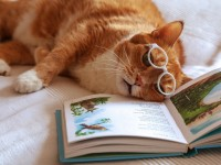 Собирать пазл Poems admirer  онлайн