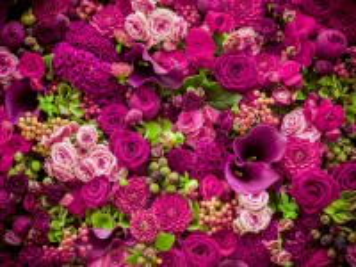 Собирать пазл Purple flowers онлайн
