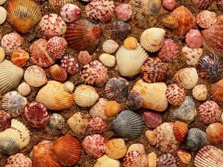 Собирать пазл Shells онлайн