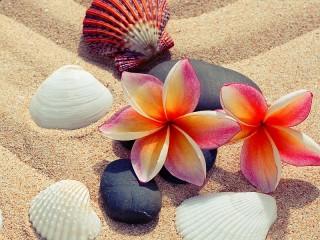 Собирать пазл Seashells on the sand онлайн