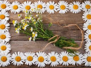 Собирать пазл Frame of daisies онлайн