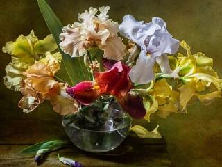 Собирать пазл Colored irises онлайн