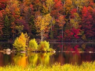 Собирать пазл River in the forest - autumn онлайн