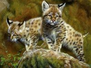 Собирать пазл Lynx kittens онлайн