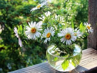 Собирать пазл Leucanthemum онлайн