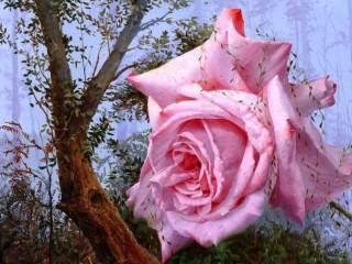 Собирать пазл roza antonova онлайн