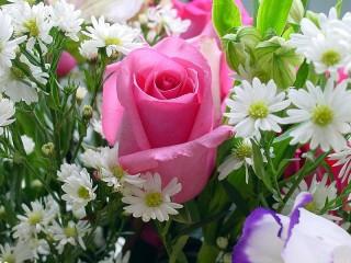 Собирать пазл Rose among daisies онлайн