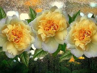 Собирать пазл Roses on glass онлайн