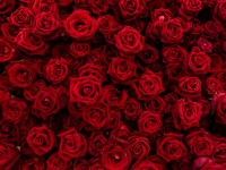 Собирать пазл Ruby rose онлайн