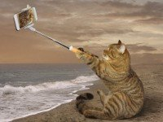 Собирать пазл Selfi онлайн