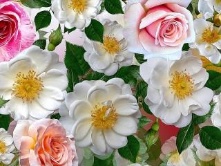Собирать пазл The briar and the rose онлайн