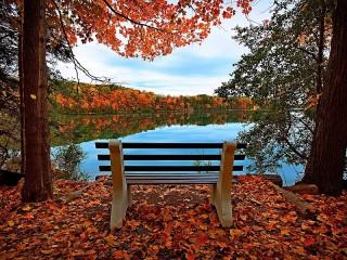 Собирать пазл Bench with a view онлайн