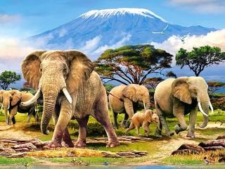 Собирать пазл Elephants онлайн