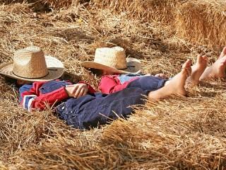 Собирать пазл Sleep in the hayloft онлайн