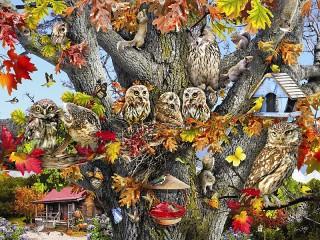 Собирать пазл Owls онлайн