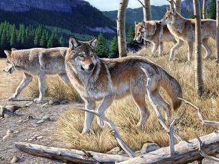 Собирать пазл Wolf pack онлайн