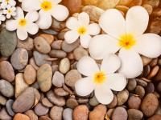 Собирать пазл Flowers on the stones онлайн