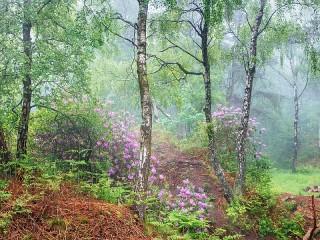 Собирать пазл In the woods онлайн