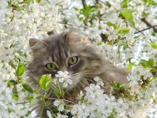 Собирать пазл Spring онлайн