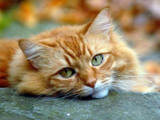 Собирать пазл Look cats онлайн