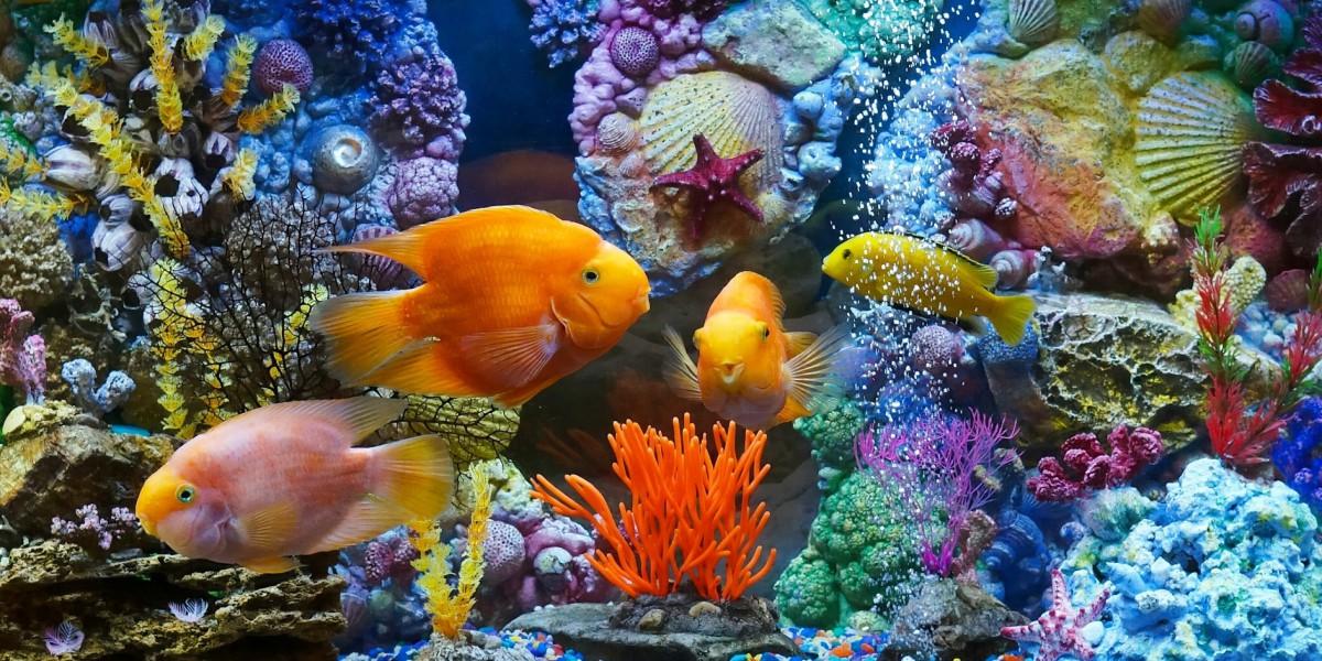 Puzzle Zbierać puzzle online - Aquarium